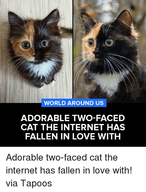 two faces: WORLD AROUND US  ADORABLE TWO-FACED  CAT THE INTERNET HAS  FALLEN IN LOVE WITH Adorable two-faced cat the internet has fallen in love with!  via Tapoos