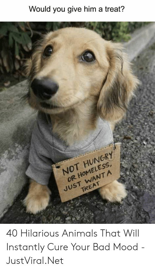 Animals, Bad, and Homeless: Would you give him a treat?  NOT HUNGRY  OR HOMELESS  JUST WANTA  TREAT 40 Hilarious Animals That Will Instantly Cure Your Bad Mood - JustViral.Net