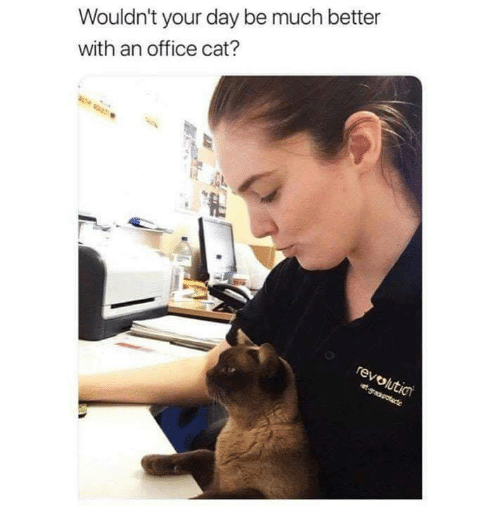 Memes, Office, and 🤖: Wouldn't your day be much better  with an office cat?