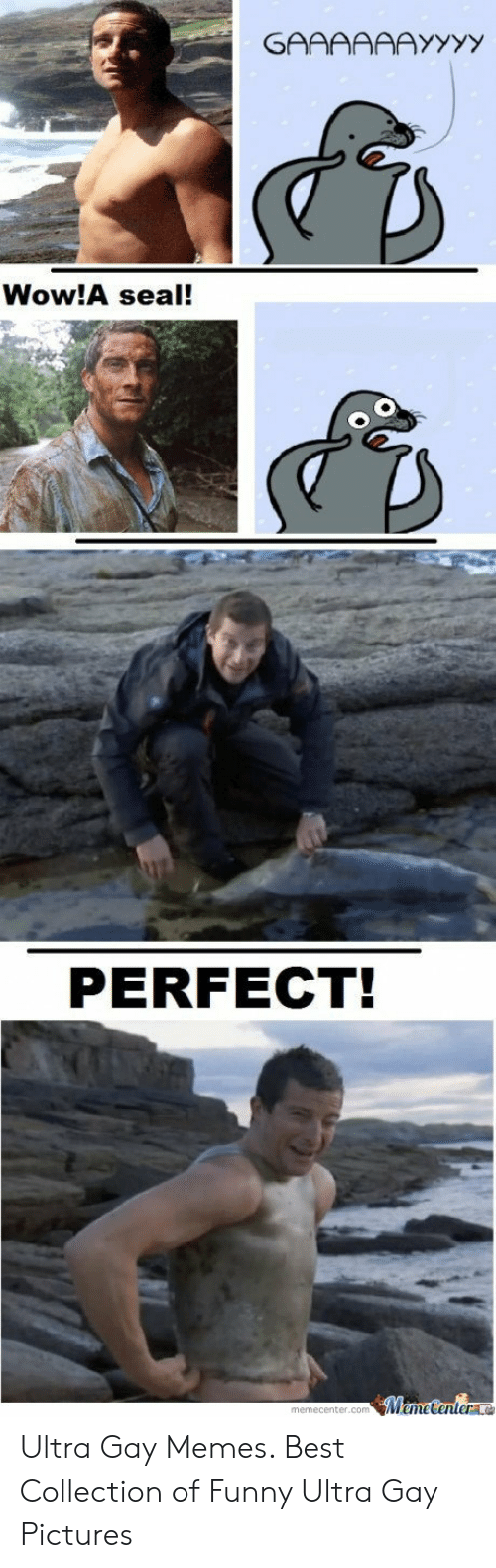 Funny, Memes, and Wow: Wow!A seal!  PERFECT!  memecenter.commecenterla Ultra Gay Memes. Best Collection of Funny Ultra Gay Pictures