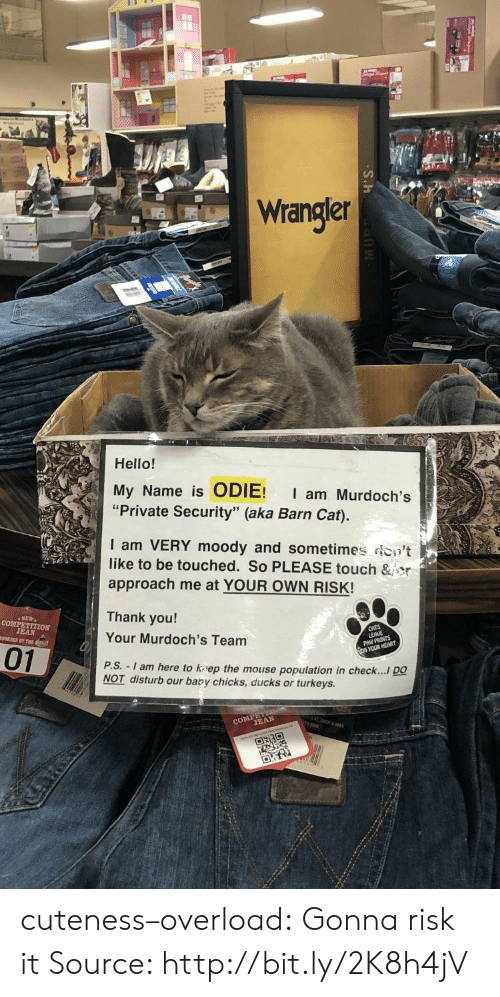"Hello, Tumblr, and Thank You: Wrangler  Hello!  My Name is ODIE! I am Murdoch's  ""Private Security"" (aka Barn Cat).  I am VERY moody and sometimes don't  like to be touched. So PLEASE touch &jor  approach me at YOUR OWN RISK!  Thank you!  Your Murdoch's Team  P.S.  01  - I am here to kaep the mouse population in check.... DO  NOT disturb our baby chicks, ducks or turkeys.  CO TEAN cuteness–overload:  Gonna risk it Source: http://bit.ly/2K8h4jV"