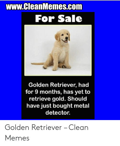 Memes, Golden Retriever, and Metal: www.CleanMemes.com  For Sale  Golden Retriever, had  for 9 months, has yet to  retrieve gold. Should  have just bought metal  detector. Golden Retriever – Clean Memes