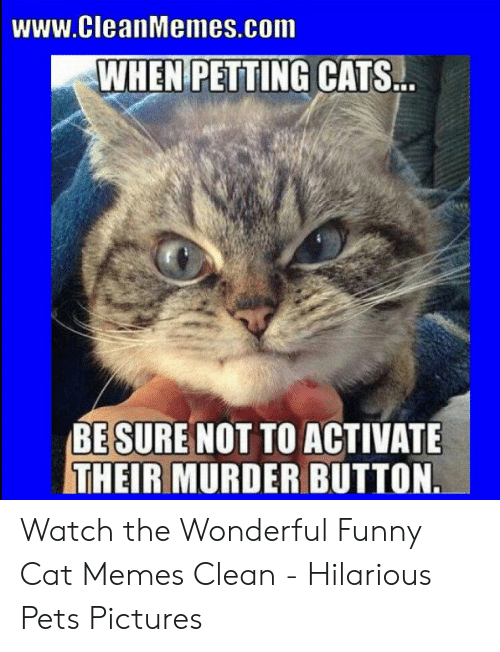 Wwwcleanmemescom Whenipetting Cats Be Sure Not To Activate