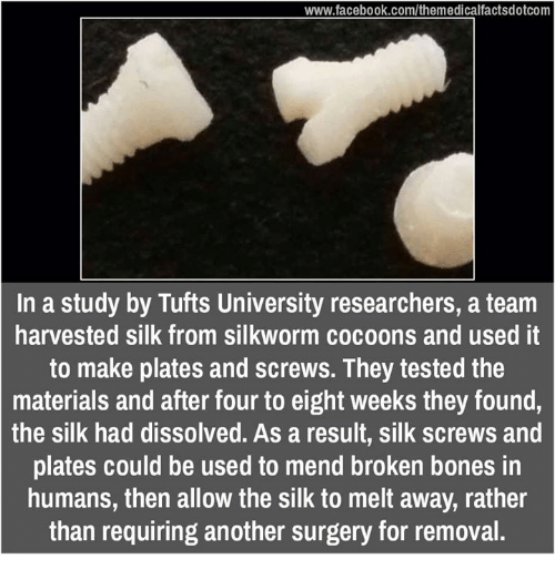 broken bone: www.facebook.com/themedicalfactsdotcom  In a study by Tufts University researchers, a team  harvested silk from silkworm cocoons and used it  to make plates and screws. They tested the  materials and after four to eight weeks they found,  the silk had dissolved. As a result, silk screws and  plates could be used to mend broken bones in  humans, then allow the silk to melt away, rather  than requiring another surgery for removal.