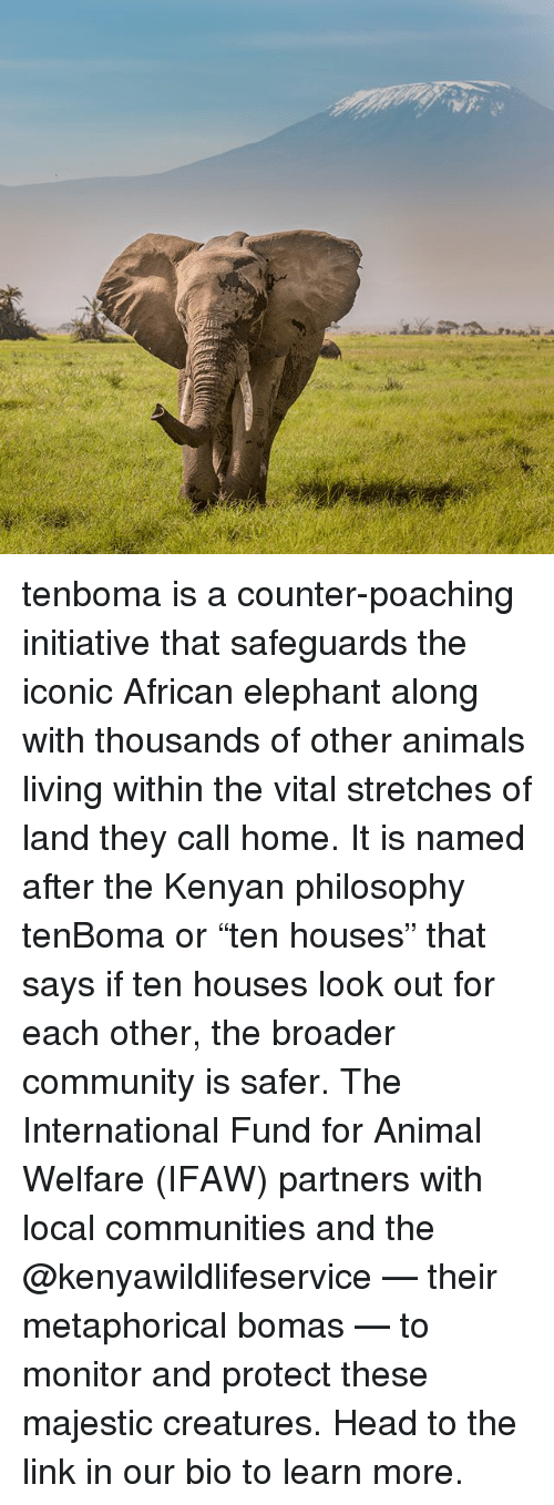 """animal welfare: WX tenboma is a counter-poaching initiative that safeguards the iconic African elephant along with thousands of other animals living within the vital stretches of land they call home. It is named after the Kenyan philosophy tenBoma or """"ten houses"""" that says if ten houses look out for each other, the broader community is safer. The International Fund for Animal Welfare (IFAW) partners with local communities and the @kenyawildlifeservice — their metaphorical bomas — to monitor and protect these majestic creatures. Head to the link in our bio to learn more."""