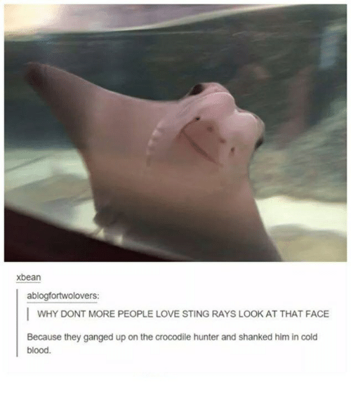 Stinged: xbean  ablogfortwolovers:  I WHY DONT MORE PEOPLE LOVE STING RAYS LOOK AT THAT FACE  Because they ganged up on the crocodile hunter and shanked him in cold  blood