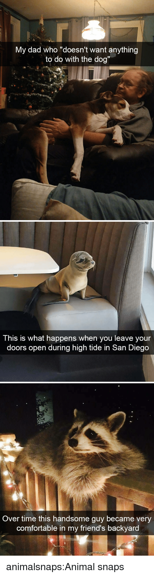 """San Diego: y dad who """"doesn't want anythin  to do with the dog""""  M  g   This is what happens when you leave your  doors open during high tide in San Diego   Over time this handsome guy became very  comfortable in my friend's backyard animalsnaps:Animal snaps"""