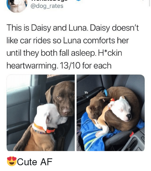 """Af, Fall, and Memes: y @dog_rates  This is Daisy and Luna. Daisy doesn't  like car rides so Luna comforts her  until they both fall asleep. H""""ckin  heartwarming. 13/10 for each  We 😍Cute AF"""