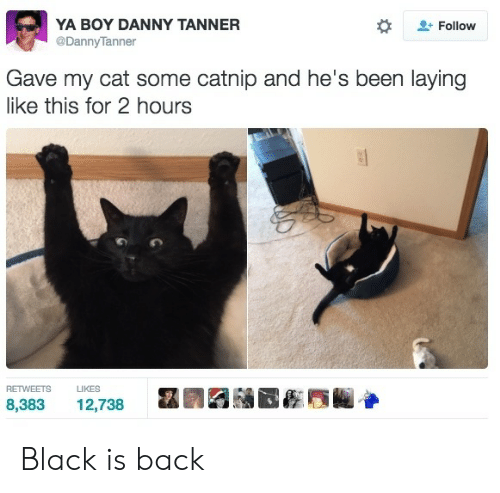catnip: YA BOY DANNY TANNER  @DannyTanner  Follow  Gave my cat some catnip and he's been laying  like this for 2 hours  RETWEETS  LIKES  8,383  12,738 Black is back