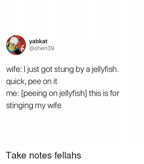Funny, Wife, and Got: yabkat  @ohen39  wife: I just got stung by a jellyfish  quick, pee on it  me: [peeing on jellyfish] this is for  stinging my wife Take notes fellahs