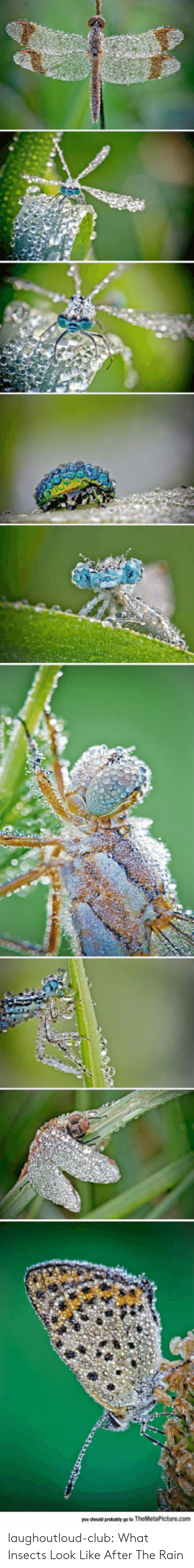Club, Tumblr, and Blog: yae should probably gote laughoutloud-club:  What Insects Look Like After The Rain