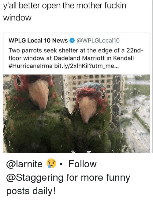 Funny, News, and Marriott: y'all better open the mother fuckin  window  WPLG Local 10 News@WPLGLocal10  Two parrots seek shelter at the edge of a 22nd  floor window at Dadeland Marriott in Kendall  #HurricaneIrma bit.ly/2xlhKil?utm-me.. @larnite 😢 • ➫➫➫ Follow @Staggering for more funny posts daily!