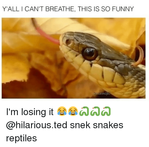 Funny, Memes, and Ted: YALLI CAN'T BREATHE, THIS IS SO FUNNY I'm losing it 😂😂🐍🐍🐍 @hilarious.ted snek snakes reptiles