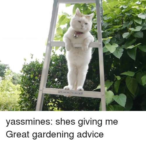 Advice, Tumblr, and Blog: yassmines: shes giving me Great gardening advice