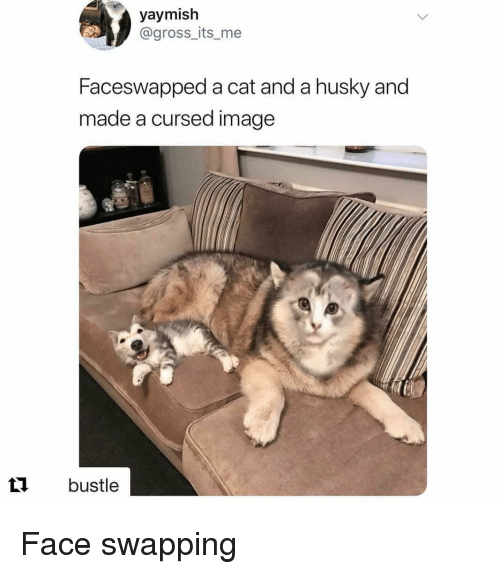 Husky, Image, and Cat: yaymish  @gross_its_me  Faceswapped a cat and a husky and  made a cursed image  t bustle Face swapping
