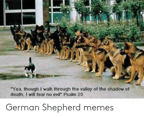 "Memes, Death, and German Shepherd: ""Yea. though I walk through the valley of the shadow of  death, I will fear no evil"" Psalm 23 German Shepherd memes"