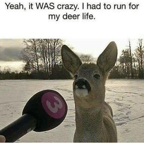 Crazy, Deer, and Life: Yeah, it WAS crazy. I had to run for  my deer life.