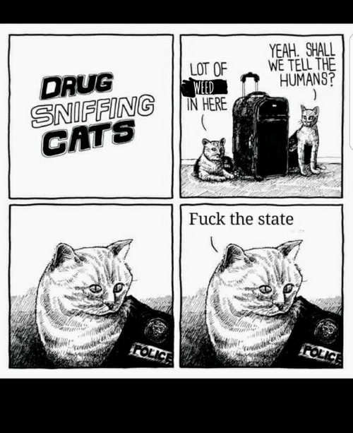Shall We: YEAH SHALL  WE TELL THE  HUMANS?  LOT OF  WEED  IN HERE  DRUG  SNIFFING  CATS  Fuck the state  FOLICE  FOLICE