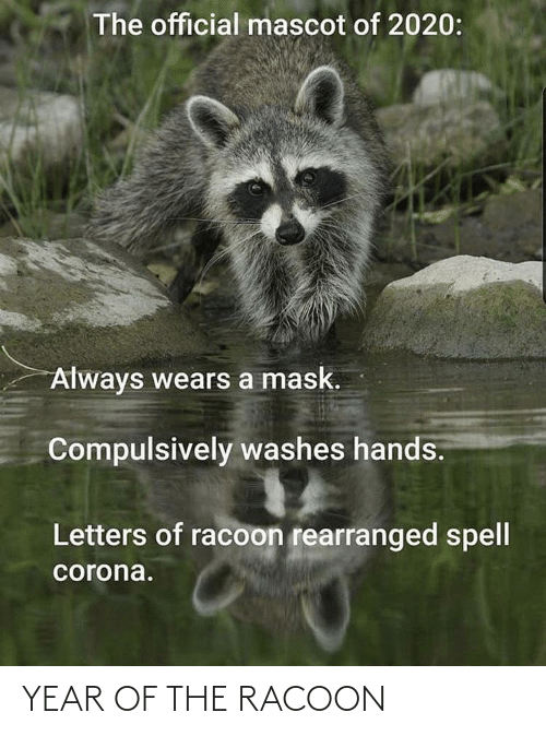 racoon: YEAR OF THE RACOON