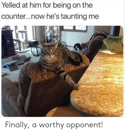 opponent: Yelled at him for being on the  counter...now he's taunting me Finally, a worthy opponent!