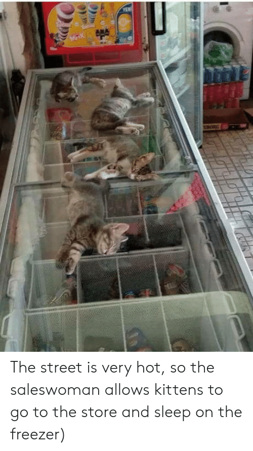 Kittens, Sleep, and Freezer: YEN  BGRG The street is very hot, so the saleswoman allows kittens to go to the store and sleep on the freezer)