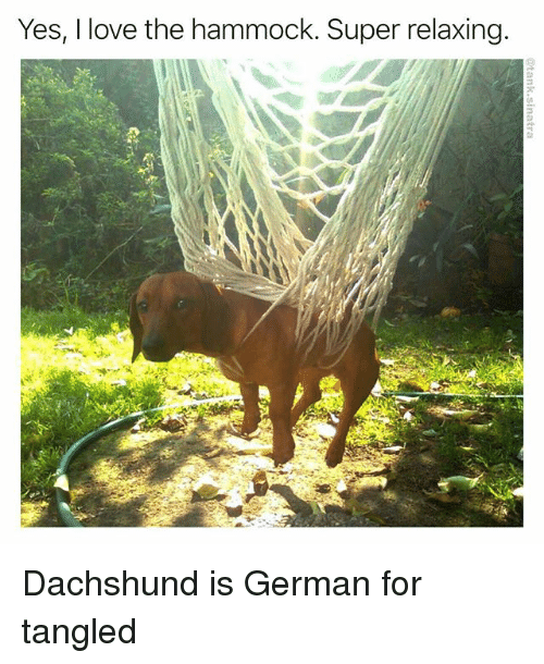 germane: Yes, I love the hammock. Super relaxing Dachshund is German for tangled