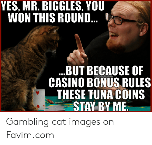 YES MR BIGGLES YOU WON THIS ROUND 1 BUT BECAUSE OF CASINO