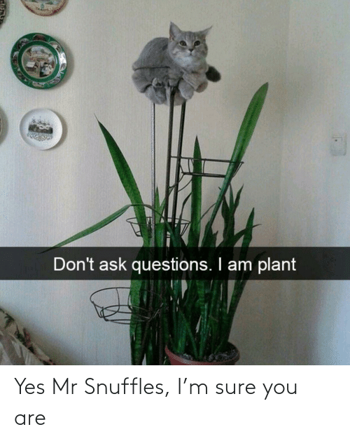 You Are: Yes Mr Snuffles, I'm sure you are