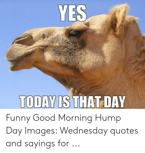 YES TODAY IS THAT DAY Funny Good Morning Hump Day Images ...
