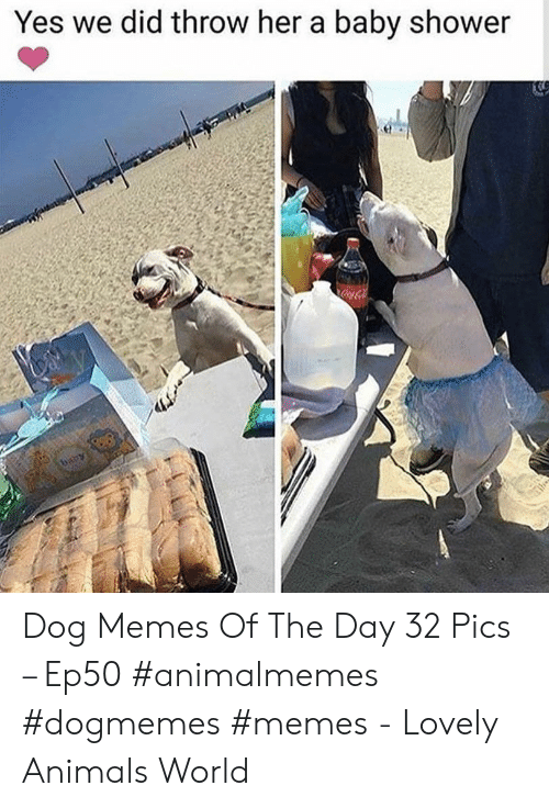 Animals, Memes, and Shower: Yes we did throw her a baby shower  CocaCola  baby Dog Memes Of The Day 32 Pics – Ep50 #animalmemes #dogmemes #memes - Lovely Animals World