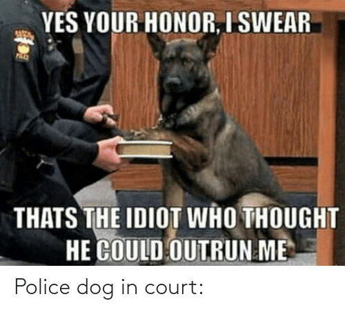 honor: YES YOUR HONOR, I SWEAR  THATS THE IDIOT WHO THOUGHT  HE COULD OUTRUN ME Police dog in court: