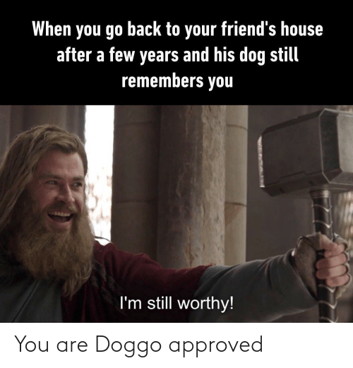You Are: You are Doggo approved