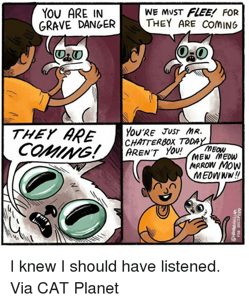 Memes, Planets, and Arent You: YOU ARE IN  WE MUST FLEE FOR  GRAVE DANGER  THEY ARE ComING  ORO  THEY  YOU'RE JUST mR  ARE  CHATTERBOX TODA  ARENT YOU!  MEOW  MEW Meow  MRROW Mow  MEOWNW!! I knew I should have listened. Via CAT Planet