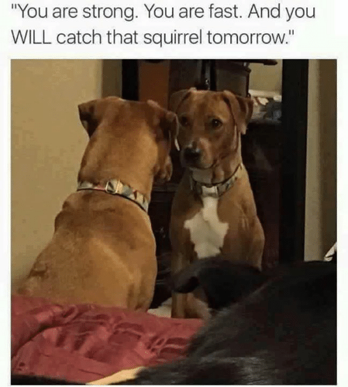 "Memes, Squirrel, and Tomorrow: ""You are strong. You are fast. And you  WILL catch that squirrel tomorrow."""