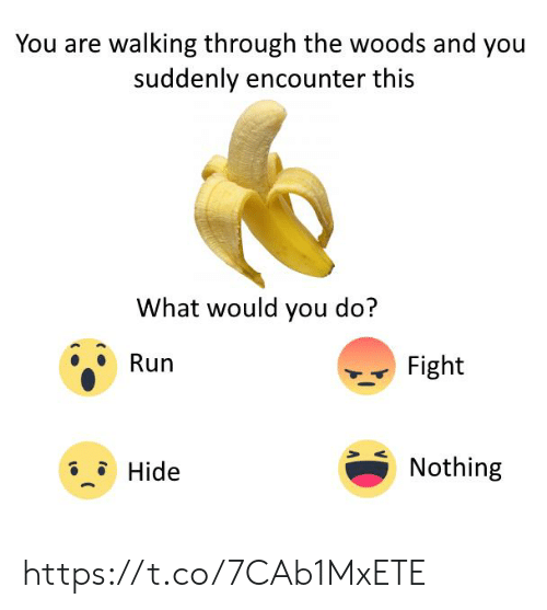 Run, Fight, and Hide: You are walking through the woods and you  suddenly encounter this  What would you do?  Run  Fight  Nothing  Hide https://t.co/7CAb1MxETE