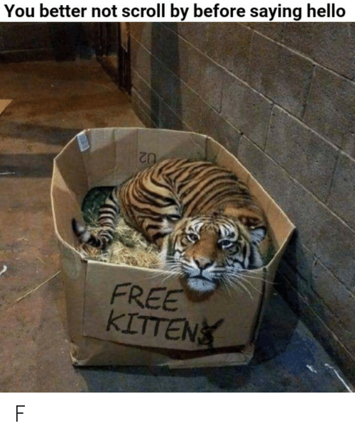 Better Not: You better not scroll by before saying hello  FREE  KITTEN F