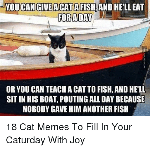 Caturday, Memes, and Fish: YOU CAN GIVEACATAFISH,AND HE'LL EAT  GORADAY  OR YOU CAN TEACH A CAT TO FISH, AND HELL  SIT IN HIS BOAT, POUTING ALL DAY BECAUSE  NOBODY GAVE HIM ANOTHER FISH  to 18 Cat Memes To Fill In Your Caturday With Joy