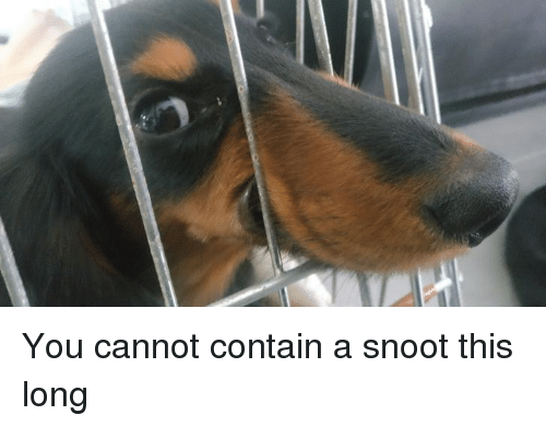 Dank, 🤖, and You: You cannot contain a snoot this long