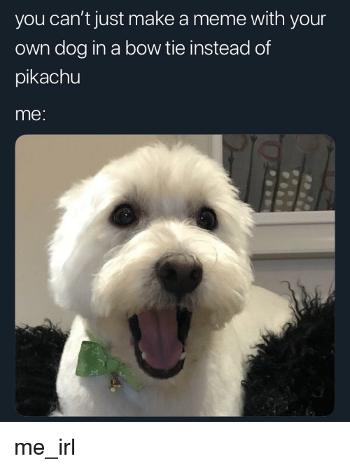 Meme, Pikachu, and Irl: you can't just make a meme with your  own dog in a bow tie instead of  pikachu  me: