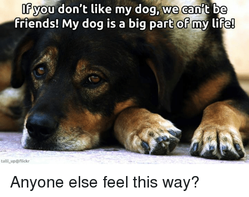 Memes, Flickr, and 🤖: you don't like my dog, we can't be  friends! My dog is a big part of my life!  talli up flickr Anyone else feel this way?