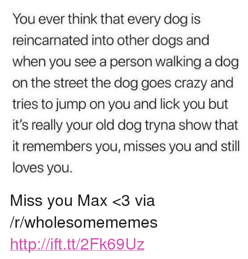 "Crazy, Dogs, and Http: You ever think that every dog is  reincarnated into other dogs and  when you see a person walking a dog  on the street the dog goes crazy and  tries to jump on you and lick you but  it's really your old dog tryna show that  it remembers you, misses you and still  loves you. <p>Miss you Max <3 via /r/wholesomememes <a href=""http://ift.tt/2Fk69Uz"">http://ift.tt/2Fk69Uz</a></p>"