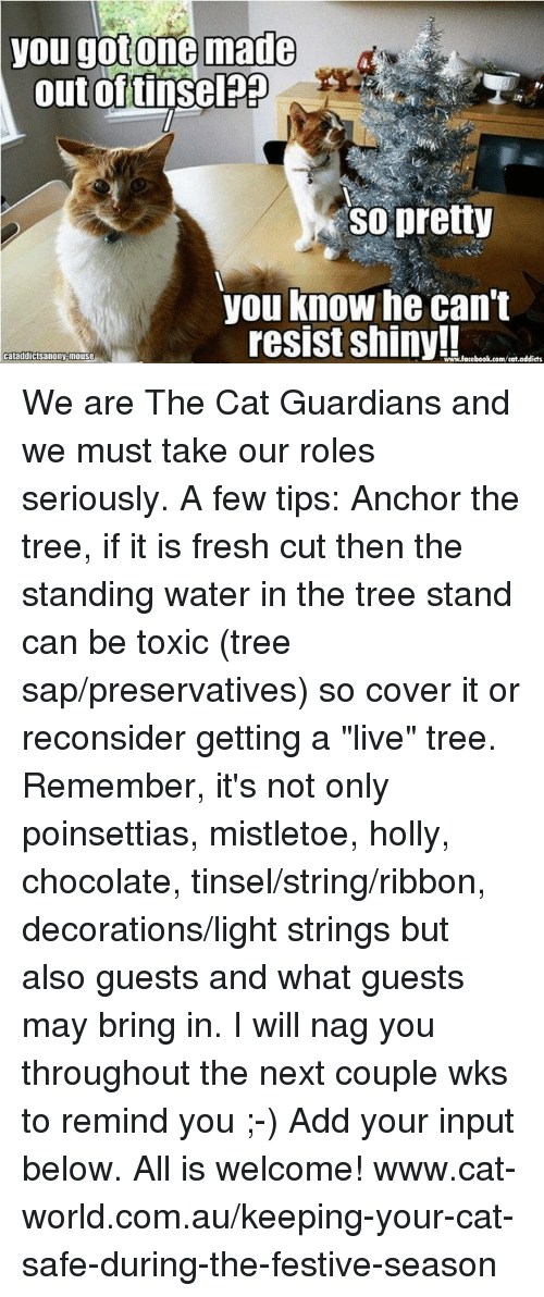 """Cats, Fresh, and Memes: you gotone made  out of tinselpp  So pretty  you know he can't  resist Shiny!  Cataddictsanony mouse  www.facebook.com/cat.addicts We are The Cat Guardians and we must take our roles seriously. A few tips: Anchor the tree, if it is fresh cut then the standing water in the tree stand can be toxic (tree sap/preservatives) so cover it or reconsider getting a """"live"""" tree. Remember, it's not only poinsettias, mistletoe, holly, chocolate, tinsel/string/ribbon, decorations/light strings but also guests and what guests may bring in. I will nag you throughout the next couple wks to remind you ;-) Add your input below. All is welcome! www.cat-world.com.au/keeping-your-cat-safe-during-the-festive-season"""