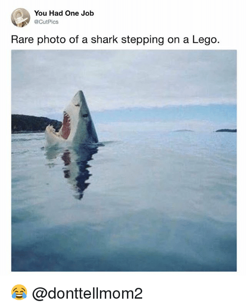 you had one job rare photo of a shark stepping on a lego 😂 lego  lego memes and shark you had one job cutpics rare photo of
