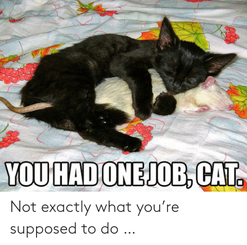 Supposed To: YOU HAD ONEJOB, CAT. Not exactly what you're supposed to do …