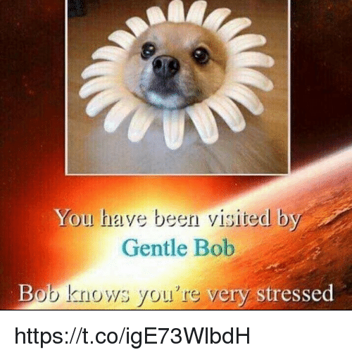Memes, Been, and 🤖: You have been visited by  Gentle Bob  Bob knows you're very  stressed https://t.co/igE73WlbdH