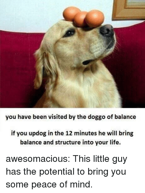 Life, Tumblr, and Blog: you have been visited by the doggo of balance  if you updog in the 12 minutes he will bring  balance and structure into your life. awesomacious:  This little guy has the potential to bring you some peace of mind.