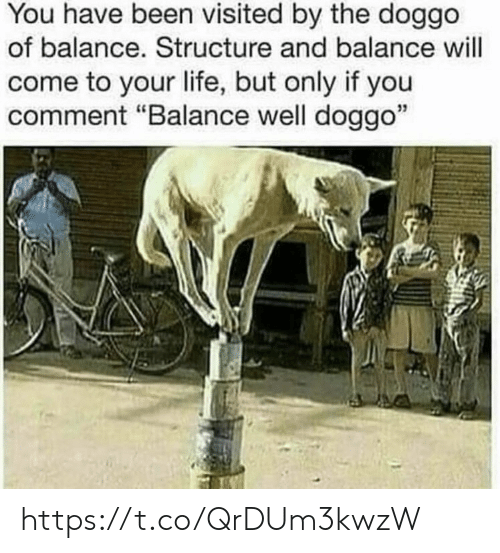 """You Have Been Visited By: You have been visited by the doggo  of balance. Structure and balance will  come to your life, but only if you  comment """"Balance well doggo""""  35 https://t.co/QrDUm3kwzW"""