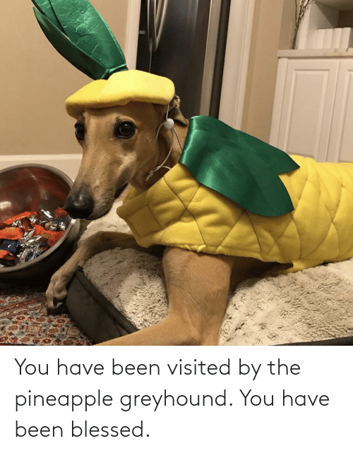 Visited: You have been visited by the pineapple greyhound. You have been blessed.