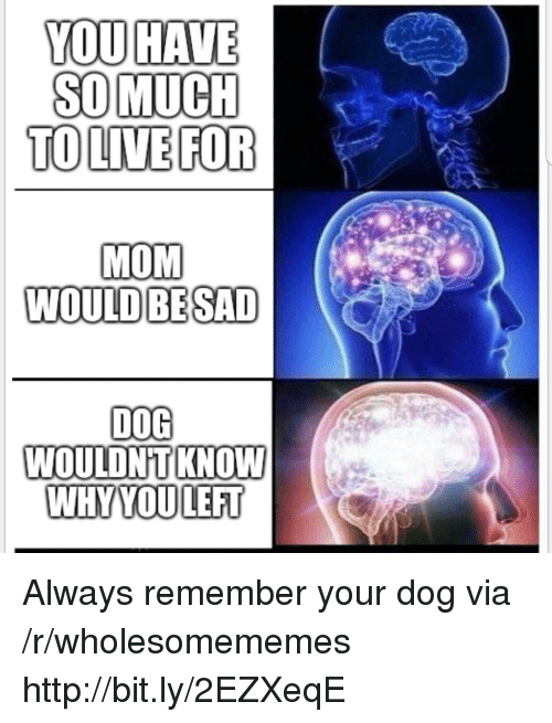 Http, Sad, and Mom: YOU HAVE  SO MUCH  TOLIVE FOR  MOM  WOULD BE SAD  D0G  WOULDNTKNOW  WIRTUODLEA了 Always remember your dog via /r/wholesomememes http://bit.ly/2EZXeqE