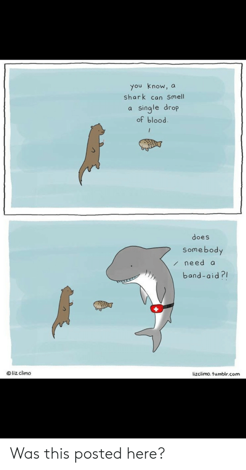 Smell, Tumblr, and Shark: you know, a  shark can Smell  single drop  of blood.  /  does  Somebody  need a  band-aid?  Oliz climo  lizclimo. tumblr.com Was this posted here?